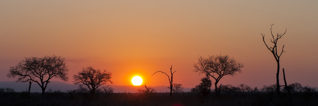 Sunset in the Bush - South Africa